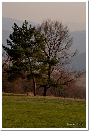 2 copaci